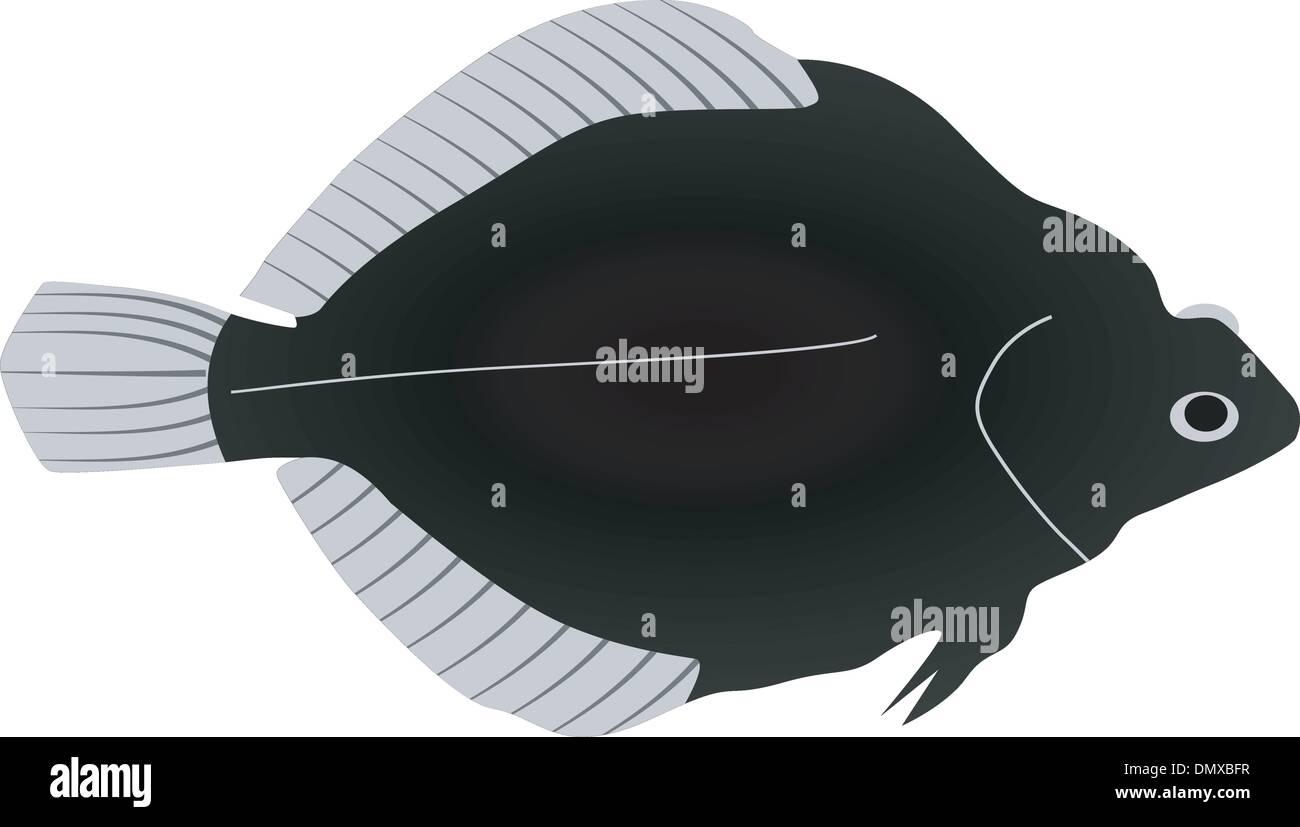 Flounder Vector Vectors Imágenes De Stock & Flounder Vector Vectors ...