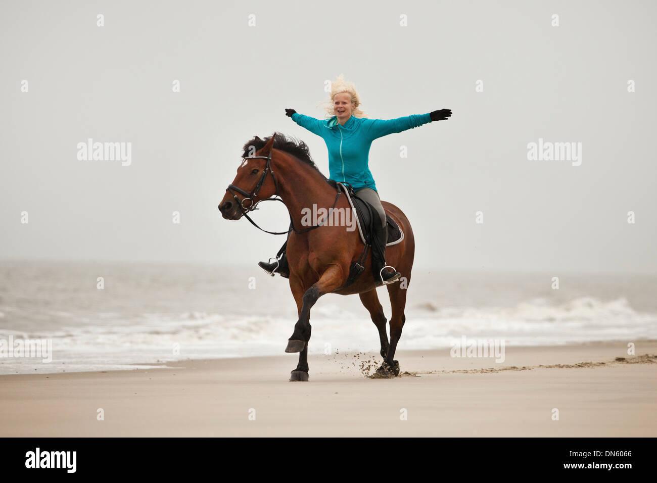 Mujer caballo freehand en un andaluz half-breed castrado, vistiendo un inglés, en la playa de herradura de Borkum, Baja Sajonia Foto de stock