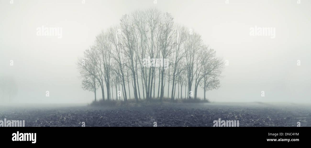 Pequeño bosque en otoño de niebla por la mañana Imagen De Stock