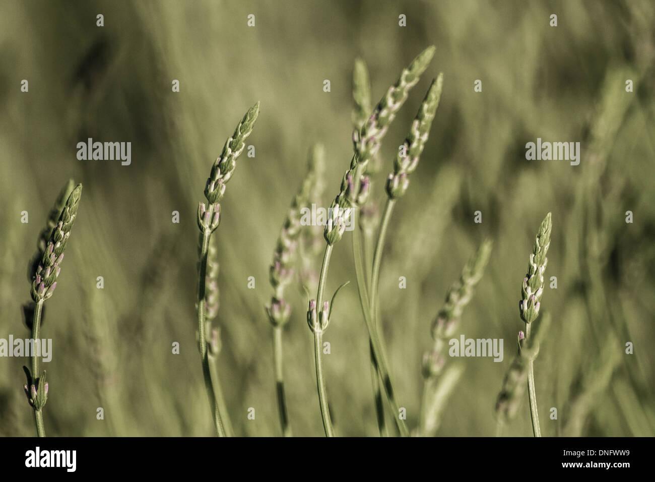 Vista cercana de madurado plantas herbáceas en un prado Imagen De Stock