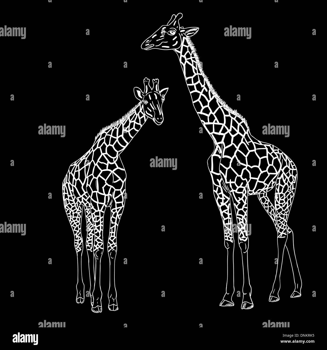 Dos jirafas. Ilustración vectorial.Ilustración del Vector