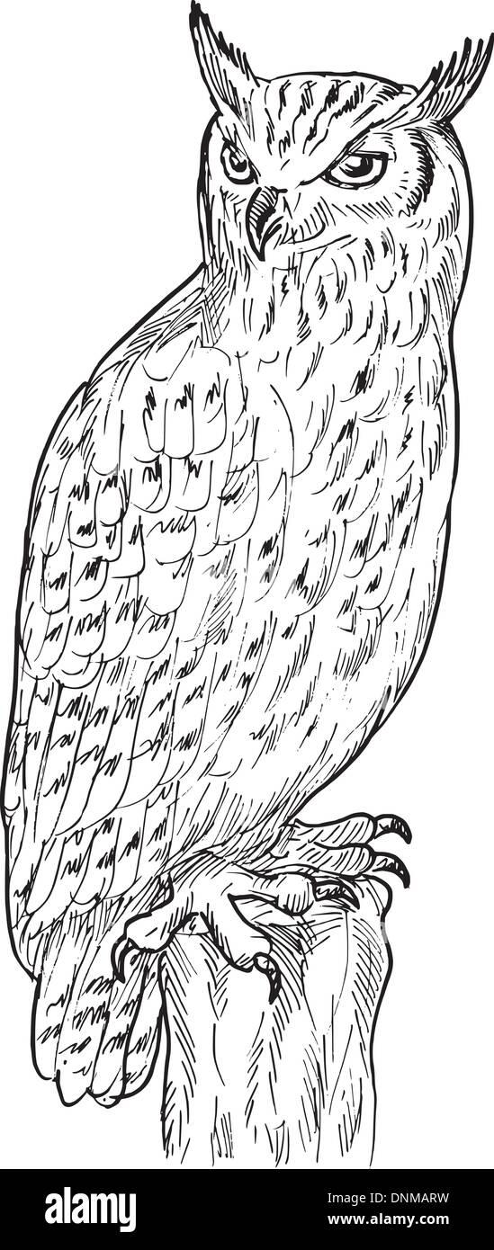 Owl Sketch Imágenes De Stock & Owl Sketch Fotos De Stock - Página 3 ...