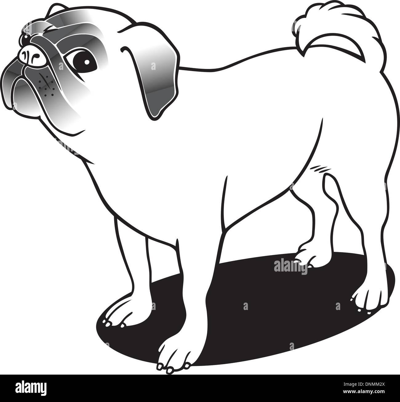 Ilustración de la raza pura pug para coloring book Ilustración del ...
