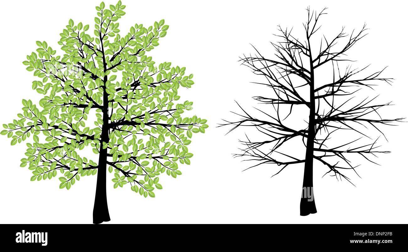 Ilustración de árbol representando primavera e invierno Imagen De Stock