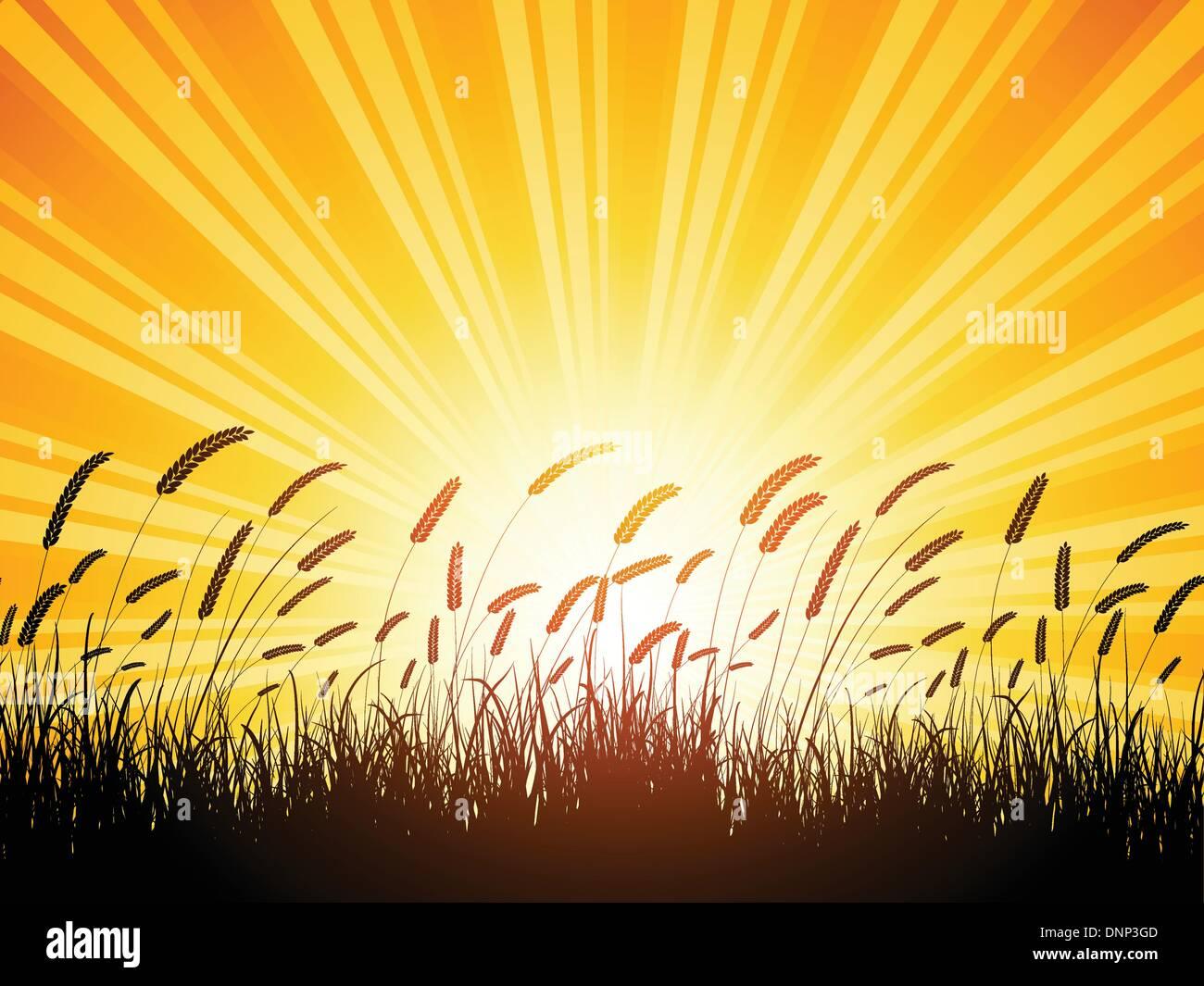 Silueta de trigo contra un atardecer cielo Imagen De Stock