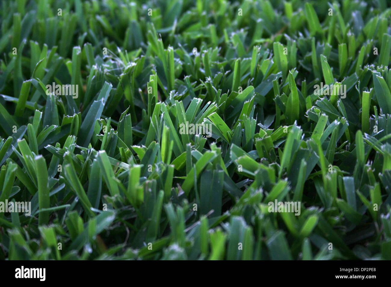Jun 10, 2006; Laguna Beach, CA, EE.UU.; briznas de hierba verde fresca, en un patio. Crédito: Foto obligatoria por Foto de stock