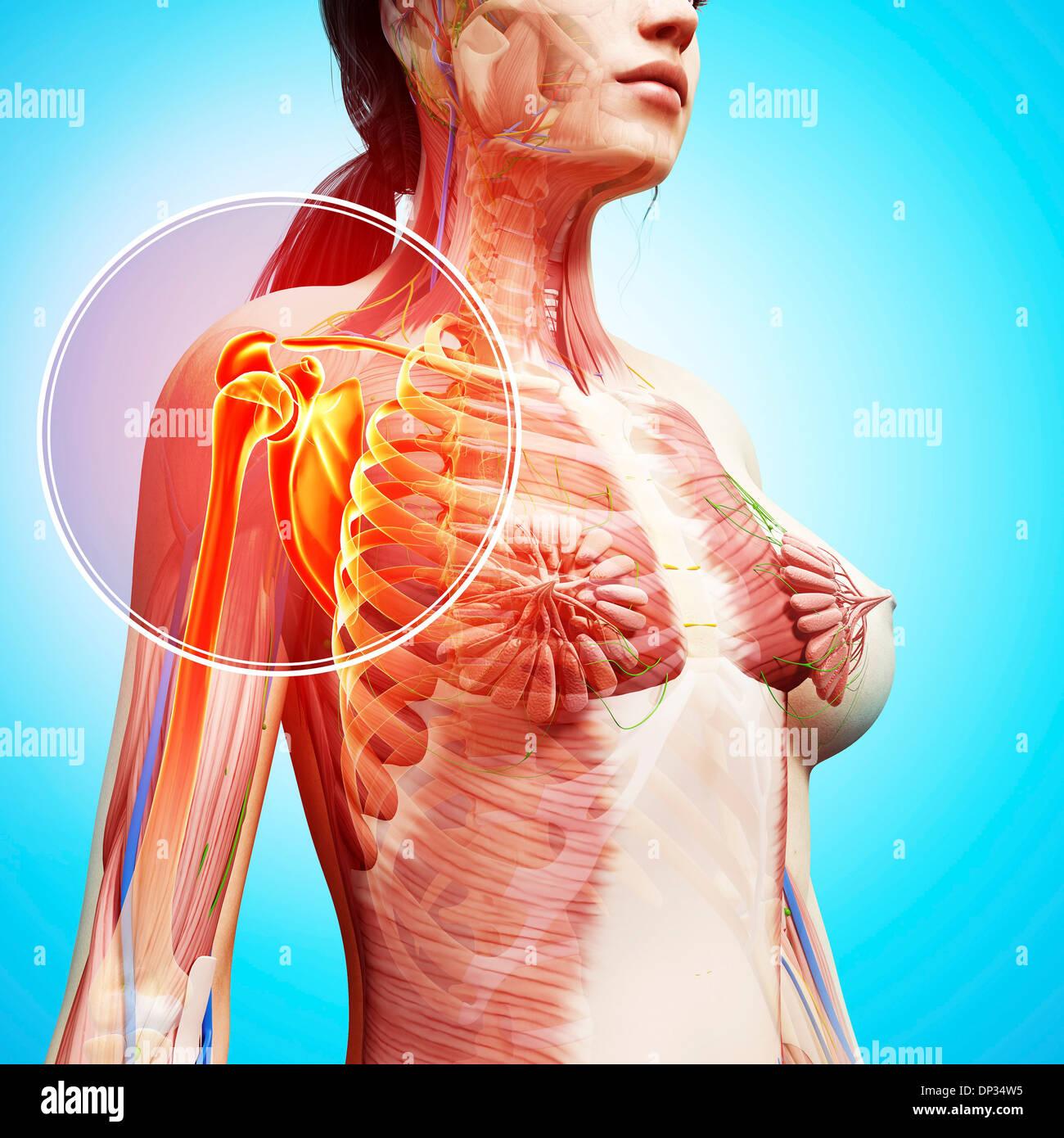 Único Anatomía Kenny Easterday Embellecimiento - Imágenes de ...