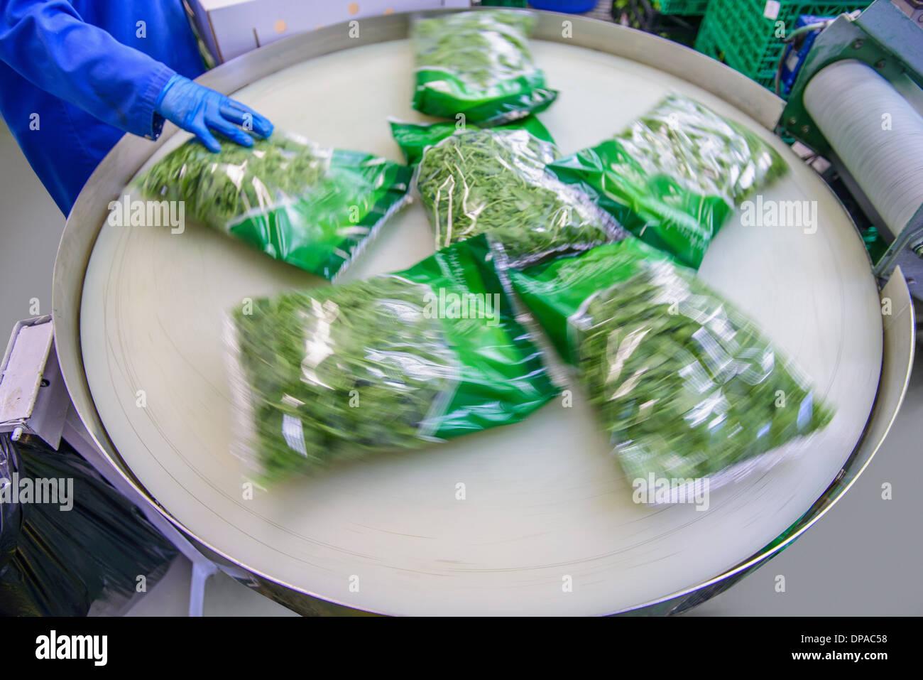 Paquetes de hojas de ensalada mixta en la línea de producción en la granja de hierbas Imagen De Stock