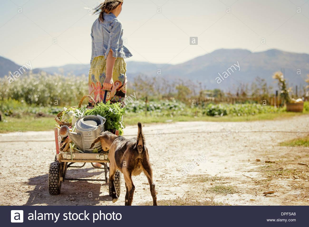 Mujer joven tirando de la granja en carreta de mano Imagen De Stock