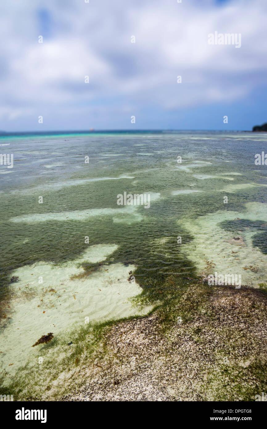 (Algas), Seychelles, Zostera Oceaní indio, África - Diciembre de 2013. Foto de stock
