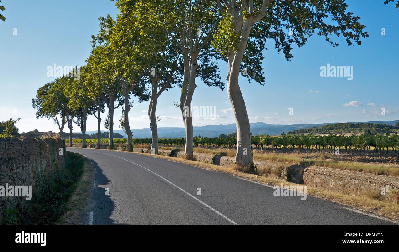Una calle arbolada en el sur de Francia con campos y viñedos y los Pirineos al fondo. Foto de stock