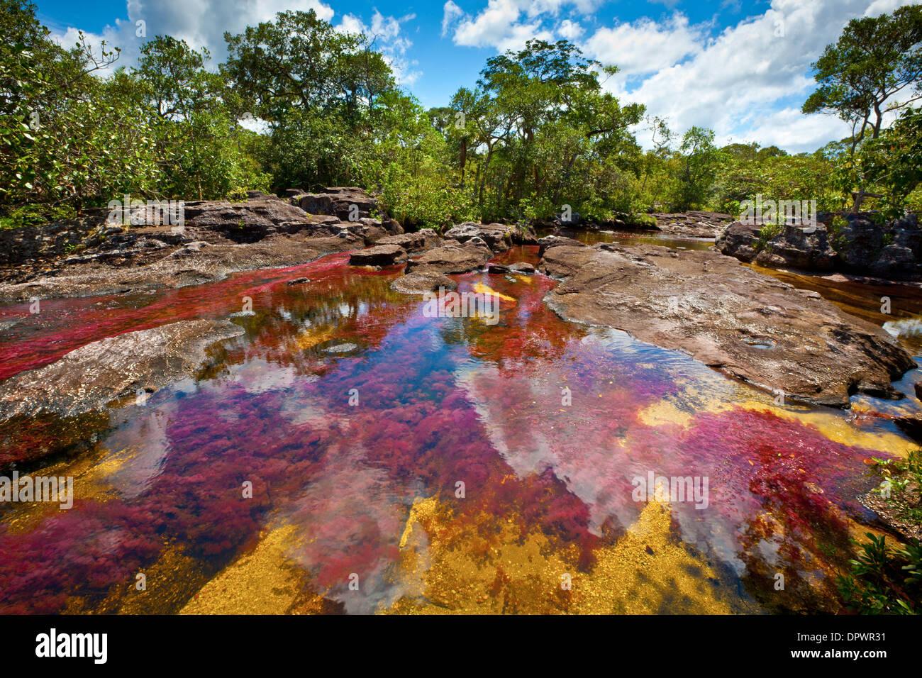 Colores a Cano Cristales, Colombia plantas submarinas (Macarenia clarigera) endémico de arroyo y área, zona del Llano Imagen De Stock