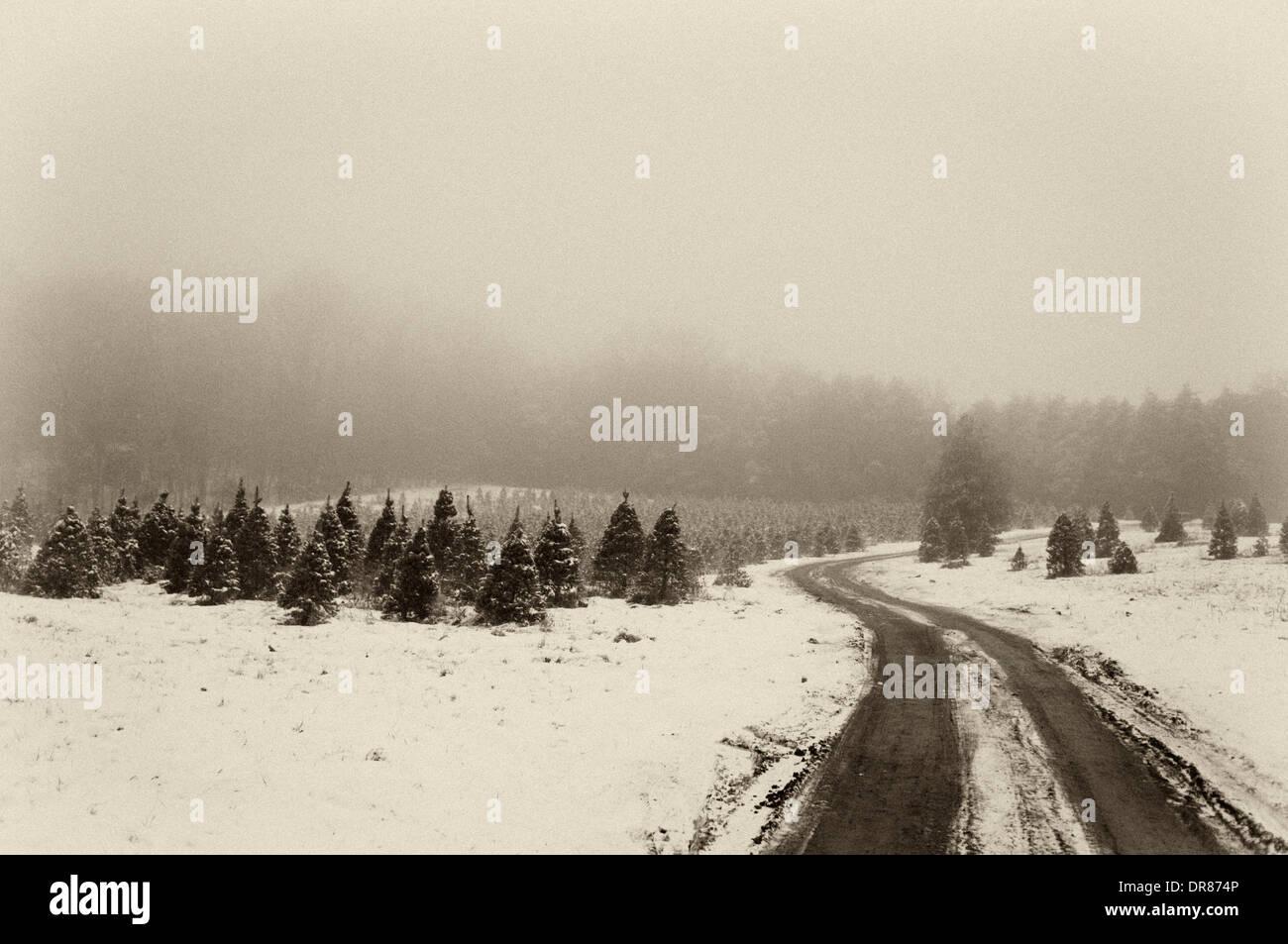Camino a través de la granja en un árbol de Navidad con nieve y niebla por la noche en el sur de Indiana Foto de stock