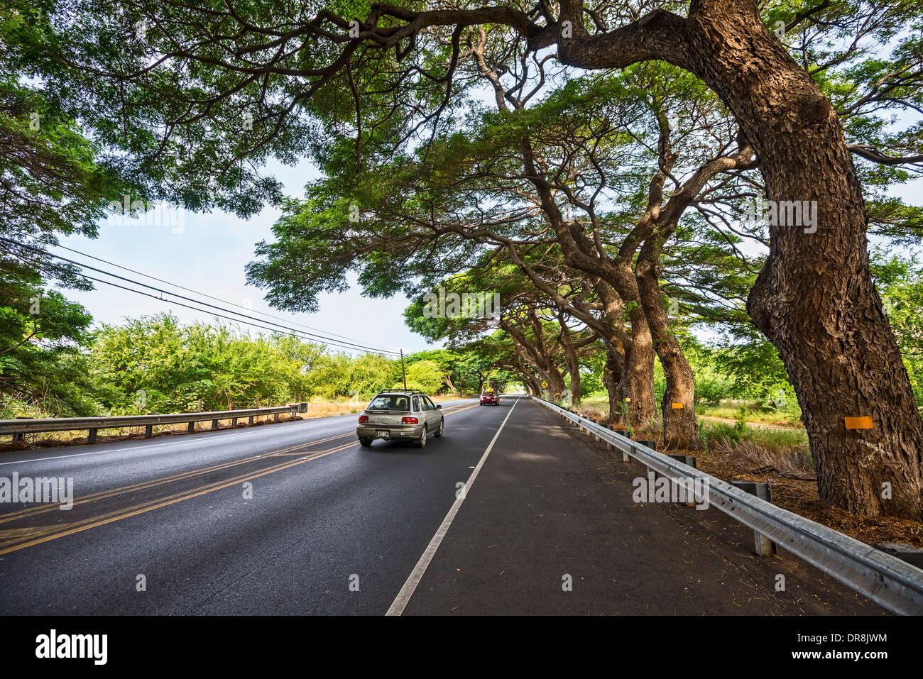 Un hermoso camino bordeado por árboles grandes en la isla de Maui, Hawai. Foto de stock