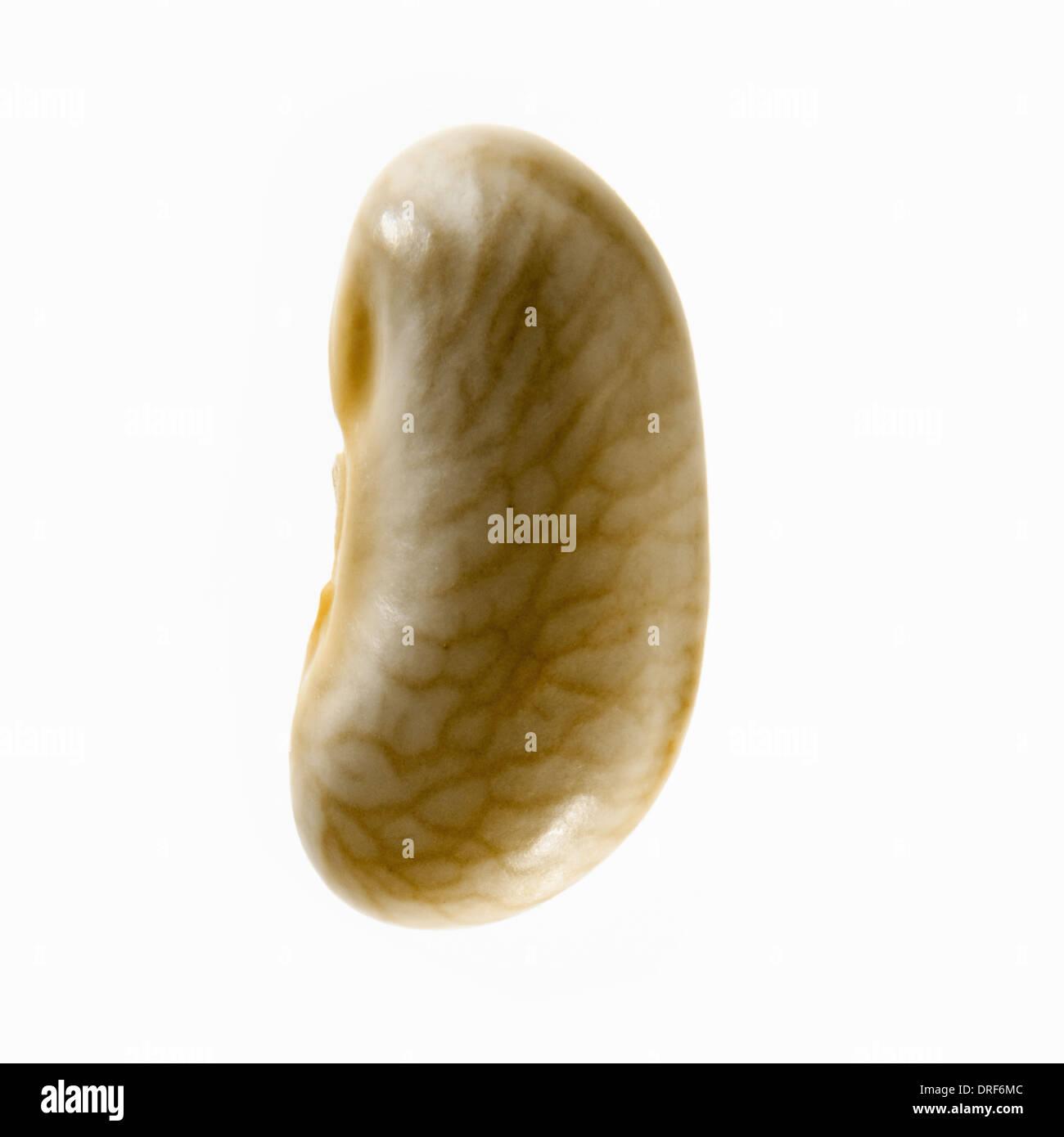 Solo bean flageolet amarillo con vetas patrón Foto de stock