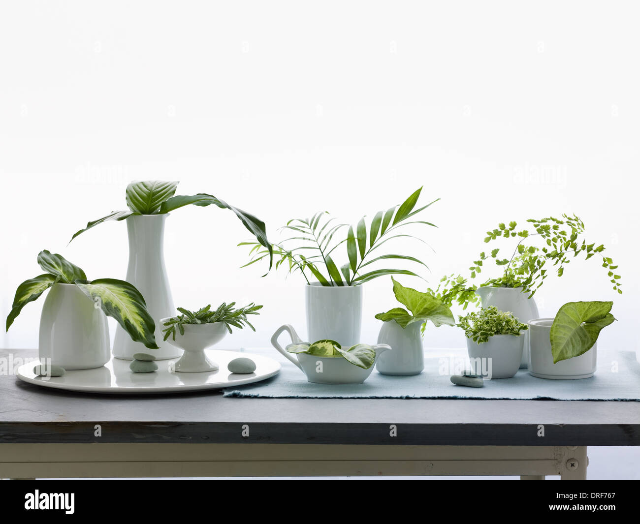 Maryland USA jarrones jarras de hojas verdes y follaje Studio shot Imagen De Stock