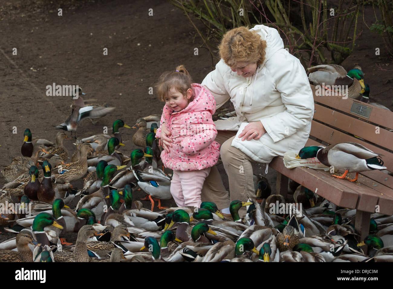 Abuela y nieta materna de duckpond patos en Victoria, British Columbia, Canadá. Imagen De Stock