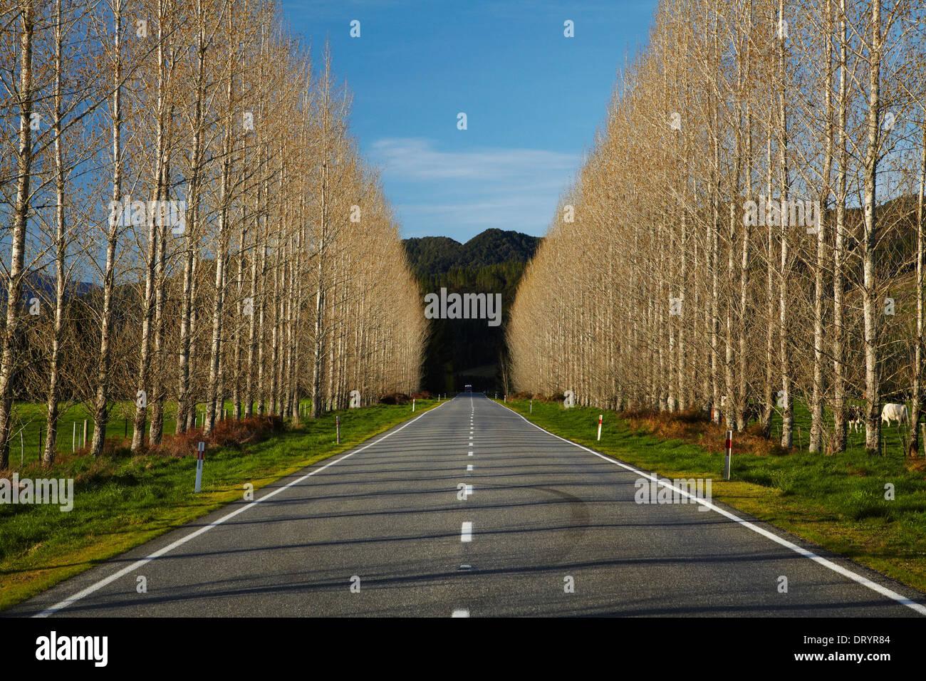 La carretera estatal 65 cerca de Maruia, Región Buller, Costa oeste, Isla del Sur, Nueva Zelanda Foto de stock