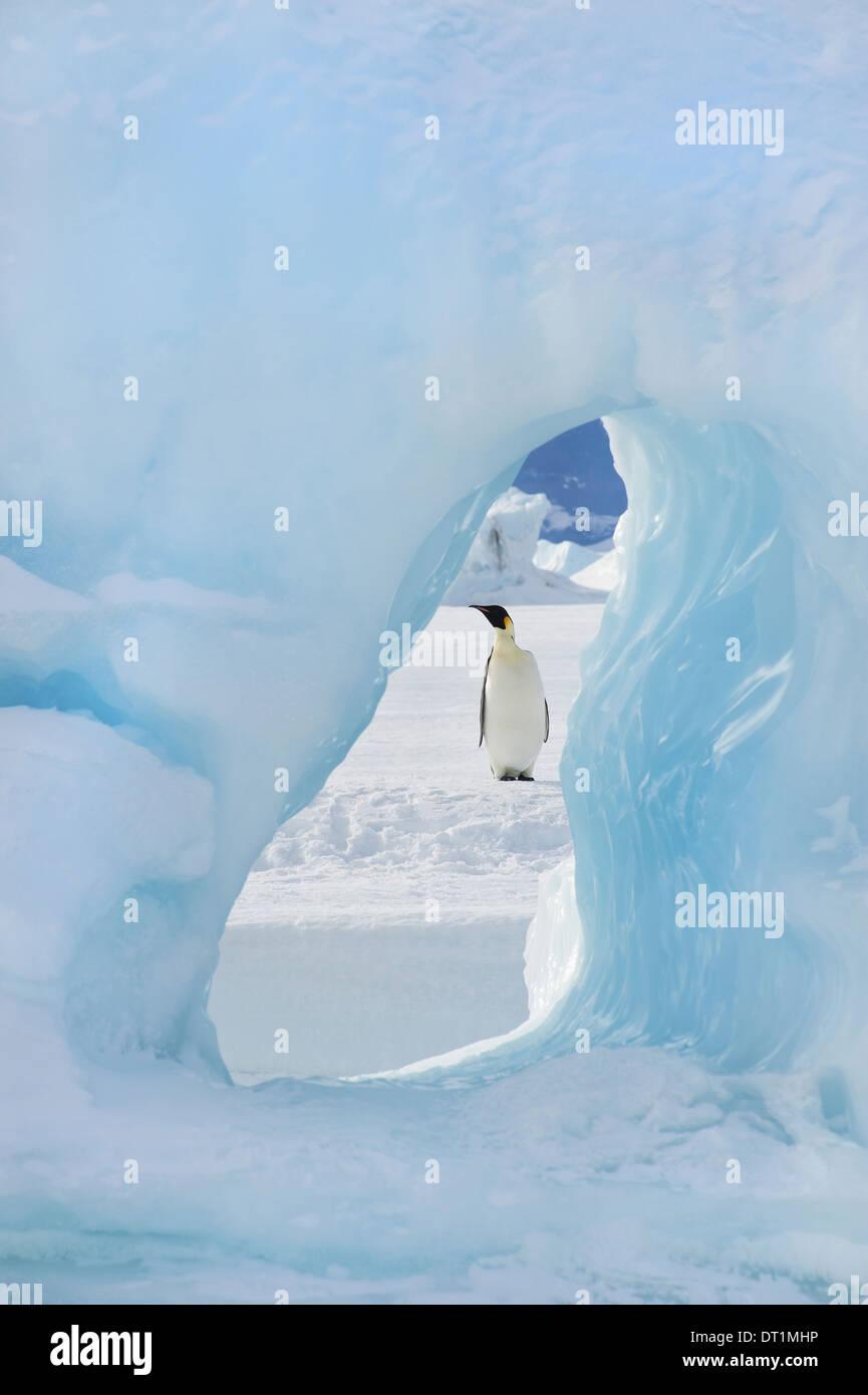 Un adulto de pingüino emperador en el hielo permanente en la isla Snow Hill vistos a través de un arco de hielo Imagen De Stock