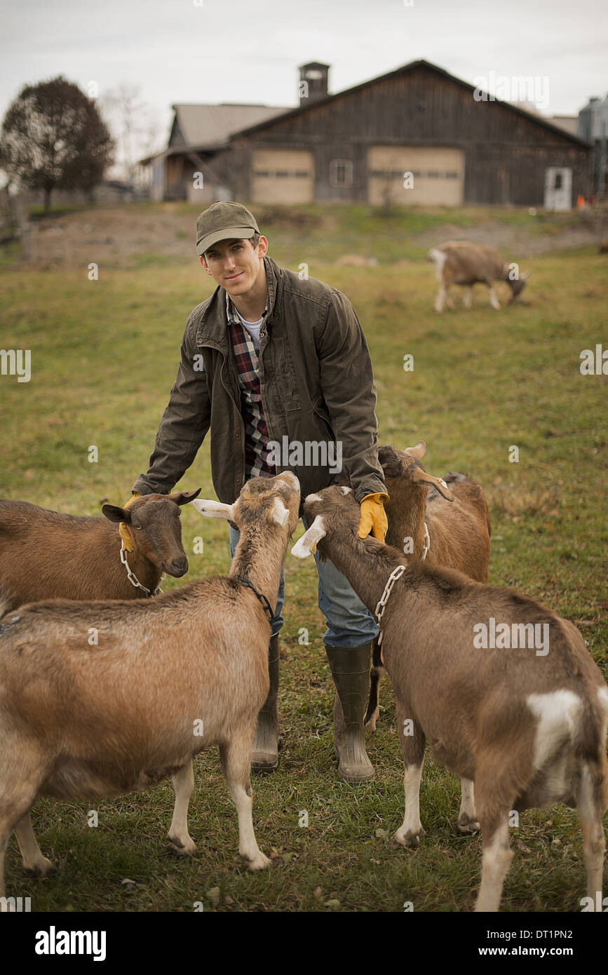 Granja lechera agricultor trabajando y cuidando a los animales Foto de stock
