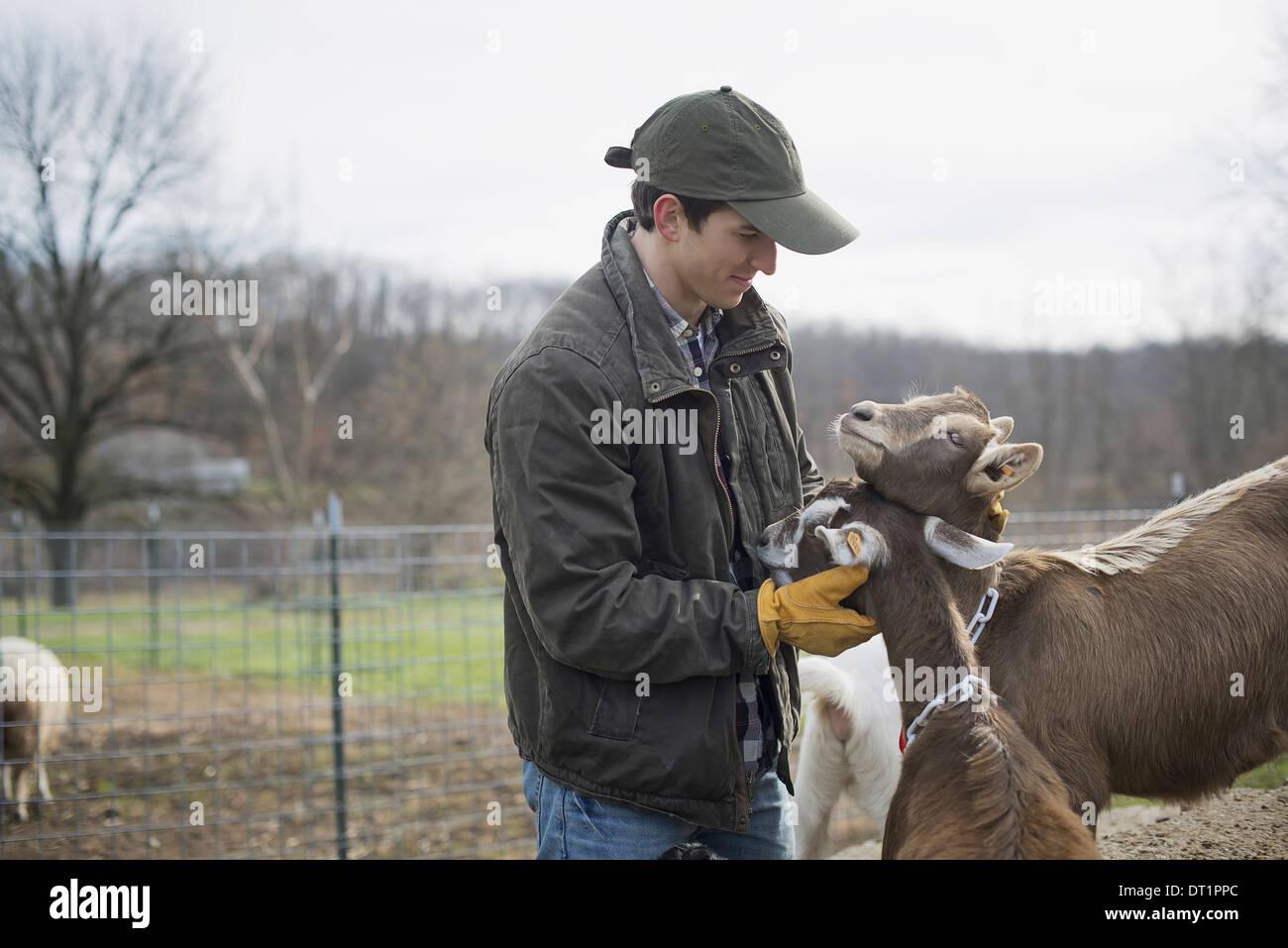Granja lechera agricultor trabajando y cuidando a los animales Imagen De Stock