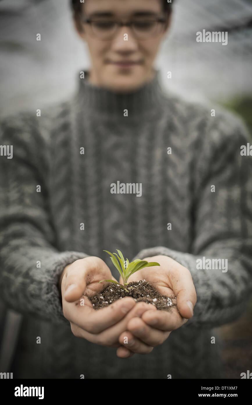 Una persona en un invernadero comercial mantiene una planta pequeña plántula en sus manos ahuecados Imagen De Stock