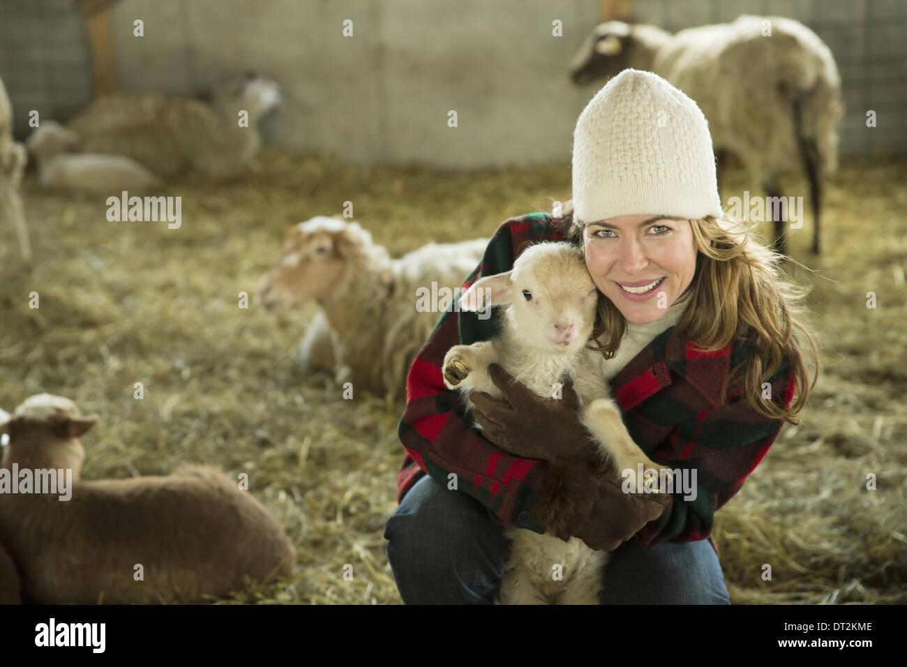 Una granja orgánica en invierno primavera fría en el Estado de Nueva York una familia trabajaba cuidando el ganado, una mujer sosteniendo un cordero pequeño Imagen De Stock