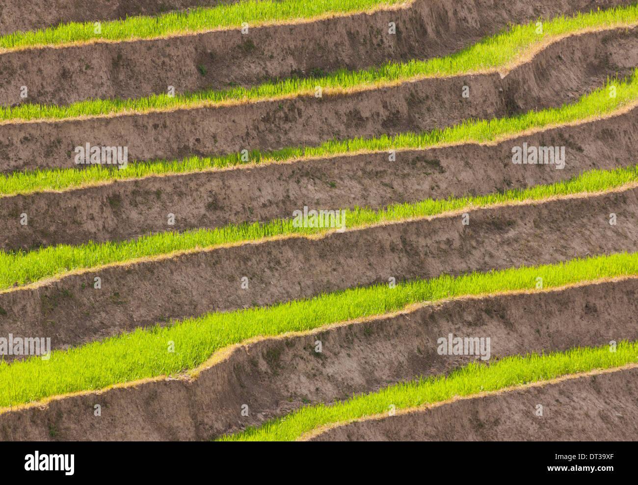 Los campos de cultivo en terrazas, valle de Paro, Bhután Foto de stock