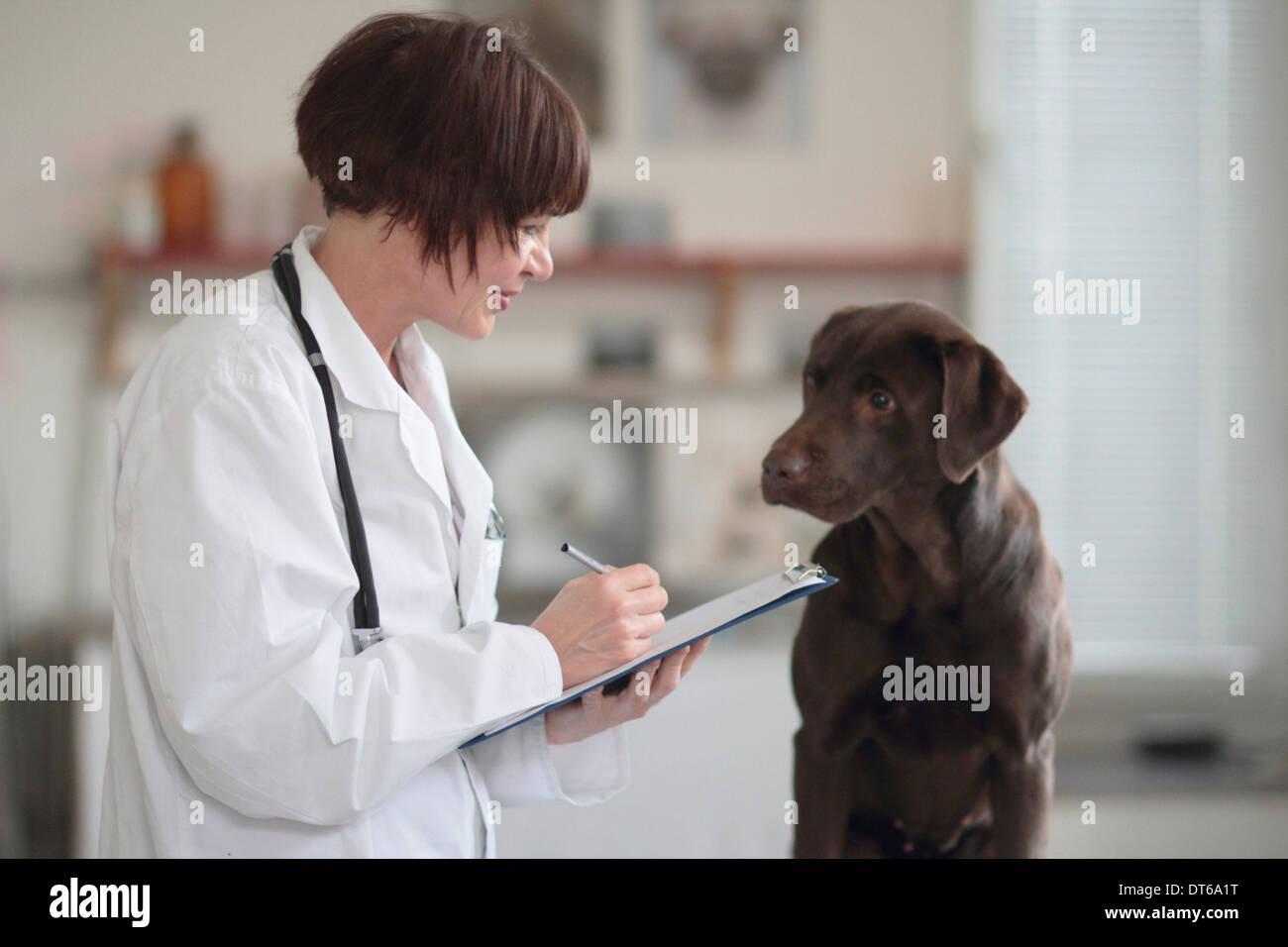 Veterinario hembra haciendo notas de examen en portapapeles Foto de stock