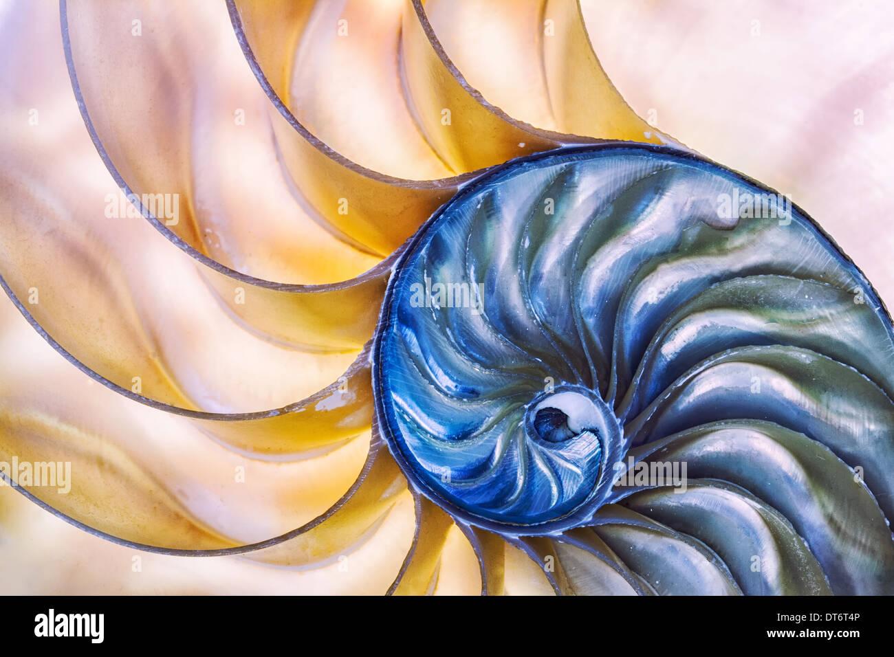 La maravilla de la naturaleza capturados en un shell Nautilus. Arte abstracto. Imagen De Stock
