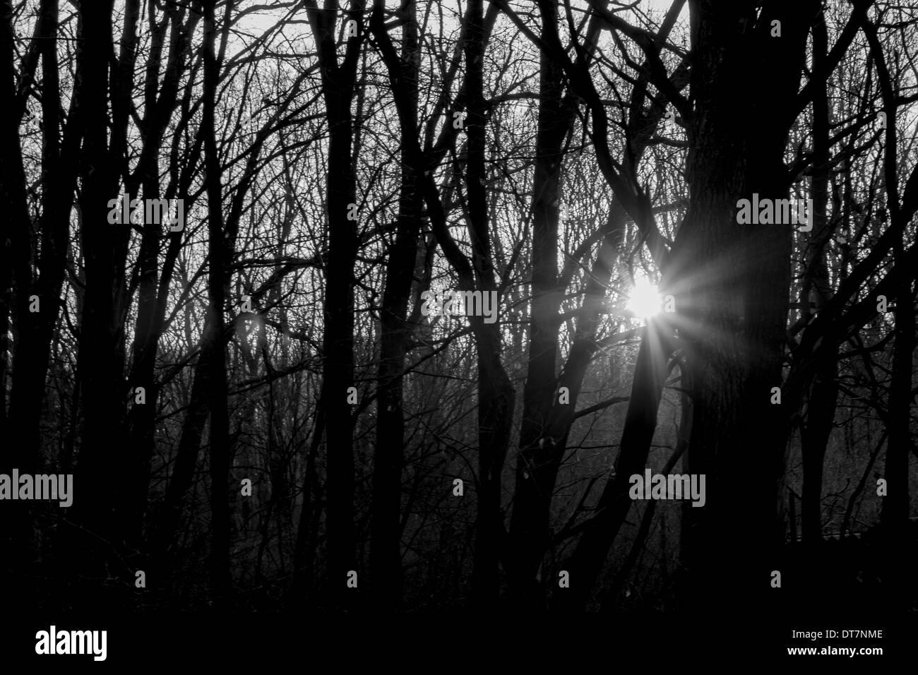 Foto de rayos del sol en un oscuro Imagen De Stock