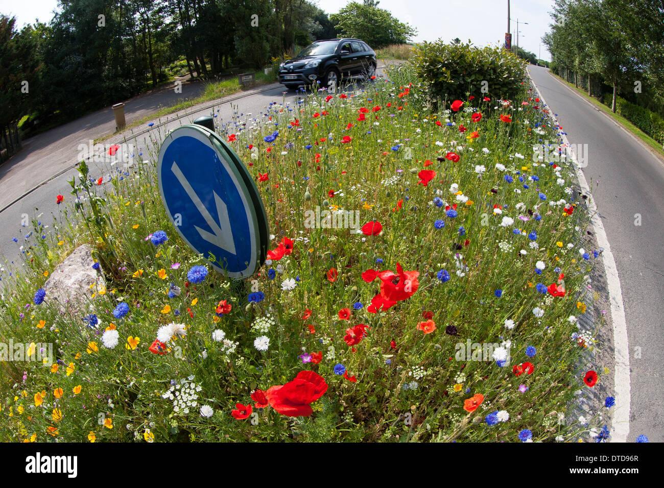Huerto, cama de flores, flores, prados floridos, tráfico, REFUGIO refugio peatonal isla, carretera, Blumenwiese, Verkehrsinsel Imagen De Stock