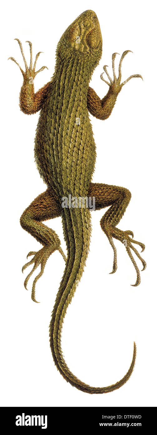 Lizard Illustration Imágenes De Stock & Lizard Illustration Fotos De ...