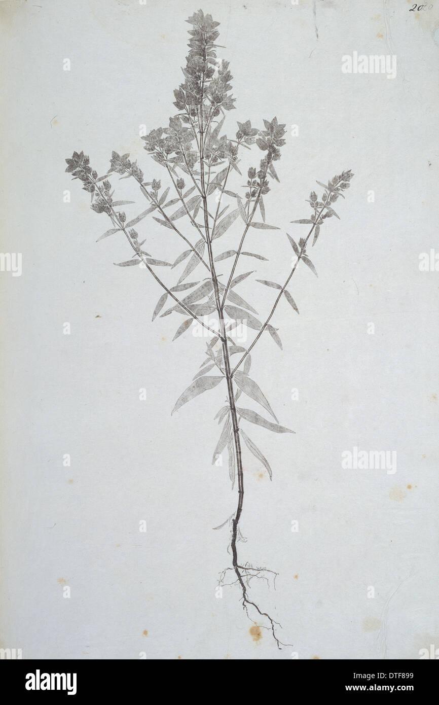 Madras Naturaleza Imprimir Imagen De Stock