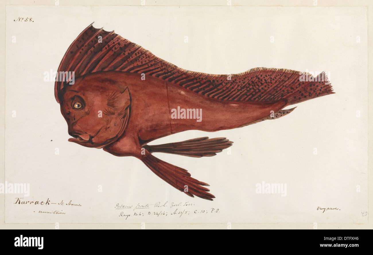Ilustración de pescado Imagen De Stock