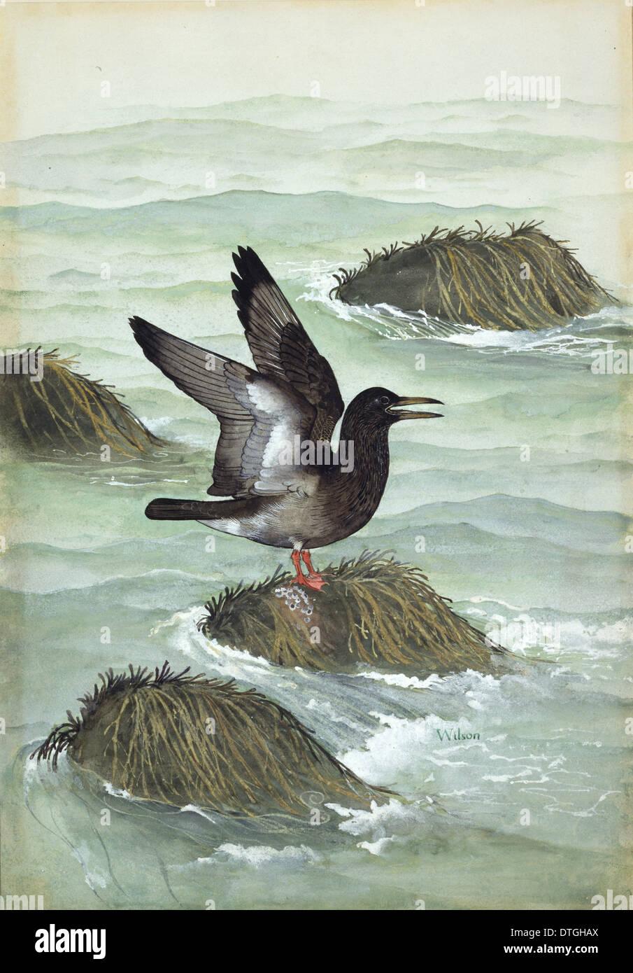 Ichthyornis dispar, Cretaceous Bird Imagen De Stock