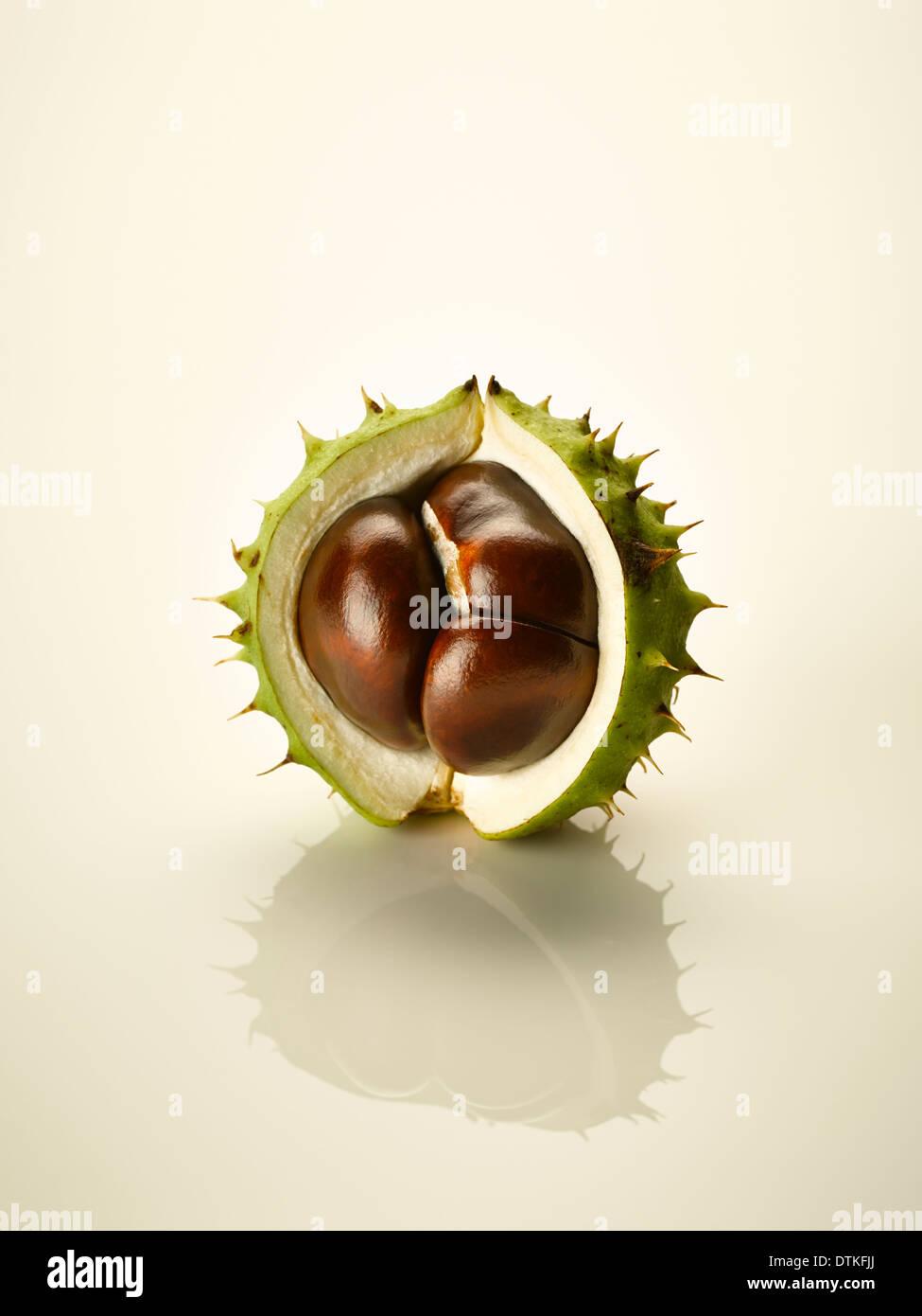 Cerca de castaño en shell Imagen De Stock