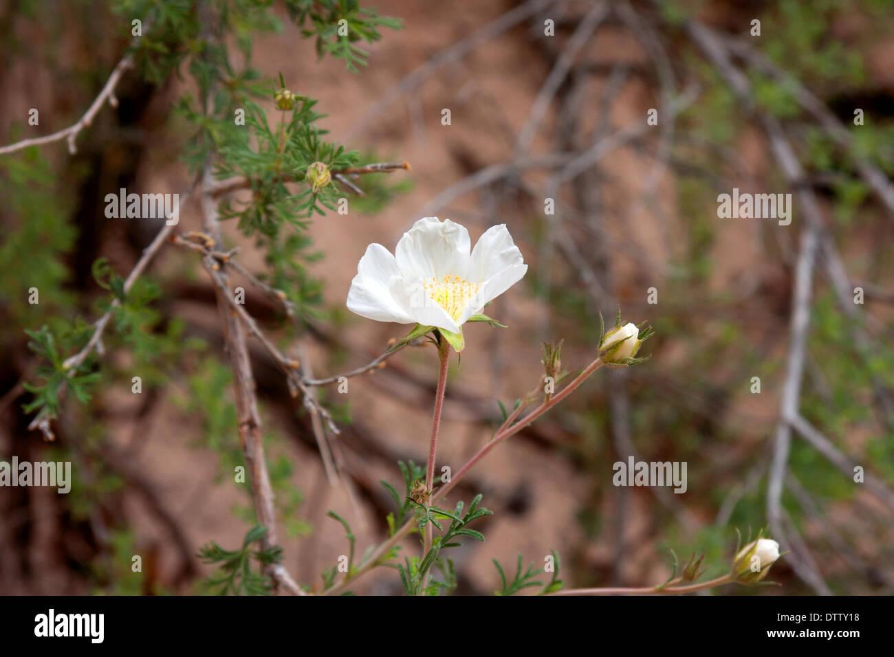 Flores silvestres en los EE.UU. Foto de stock