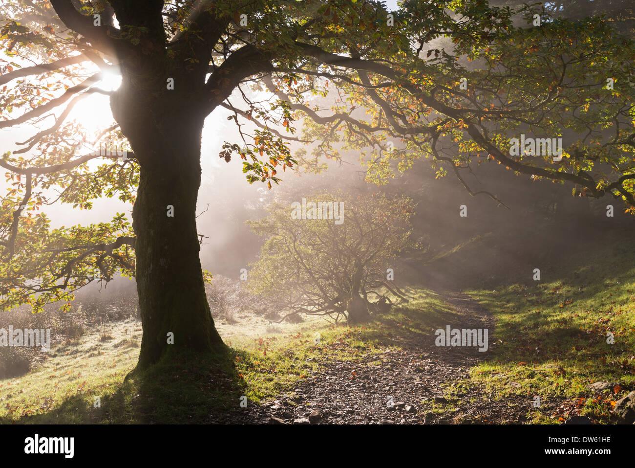 Lake District sendero serpenteante a través de Holme Wood, Loweswater, Cumbria, Inglaterra. Otoño (Noviembre) de 2013. Imagen De Stock