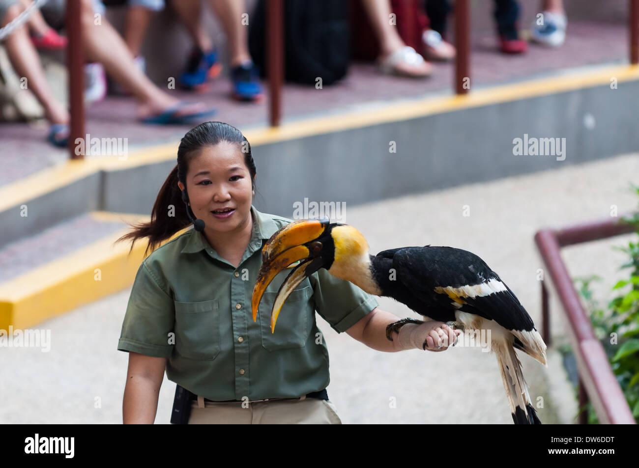Muestra de aves en el Zoo de Singapur. Imagen De Stock