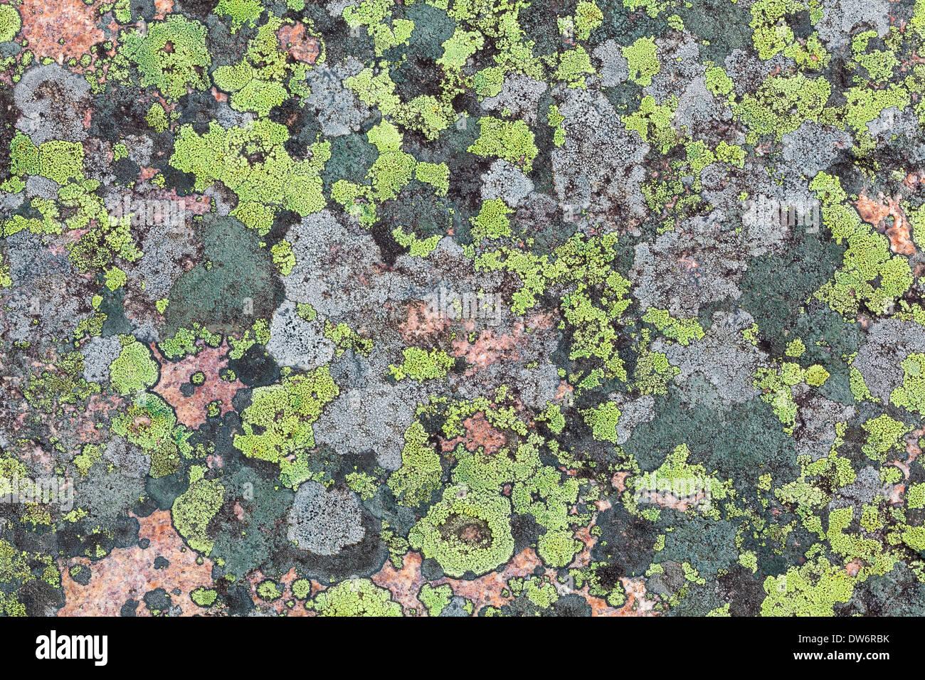 Texturas de liquen Imagen De Stock