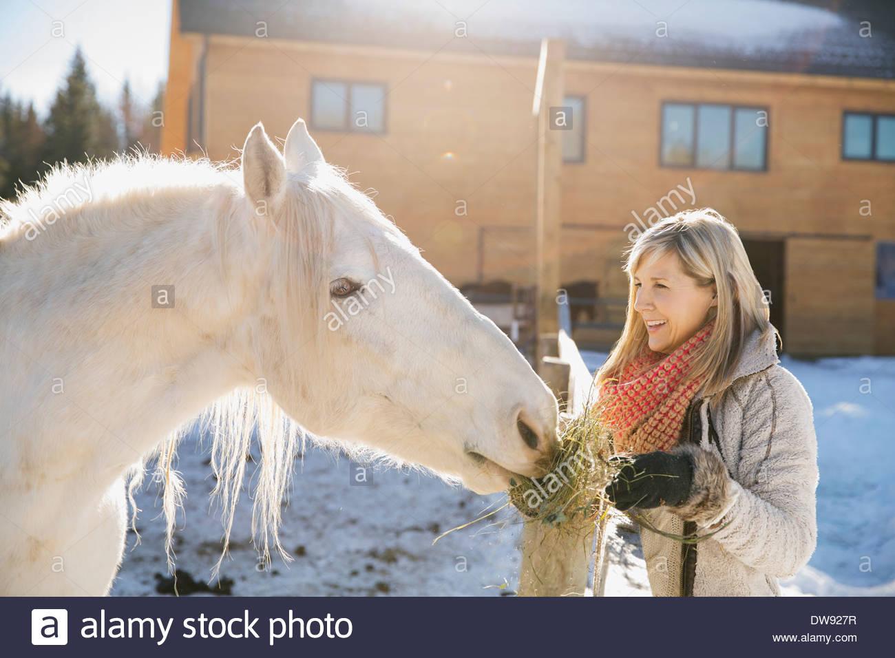 Mujer sonriente alimentar a caballo Imagen De Stock