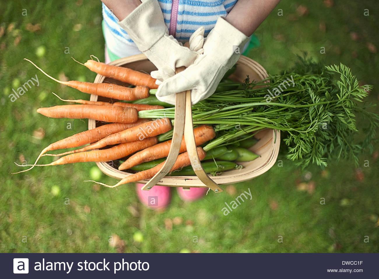 Jardín de trug zanahorias Foto de stock