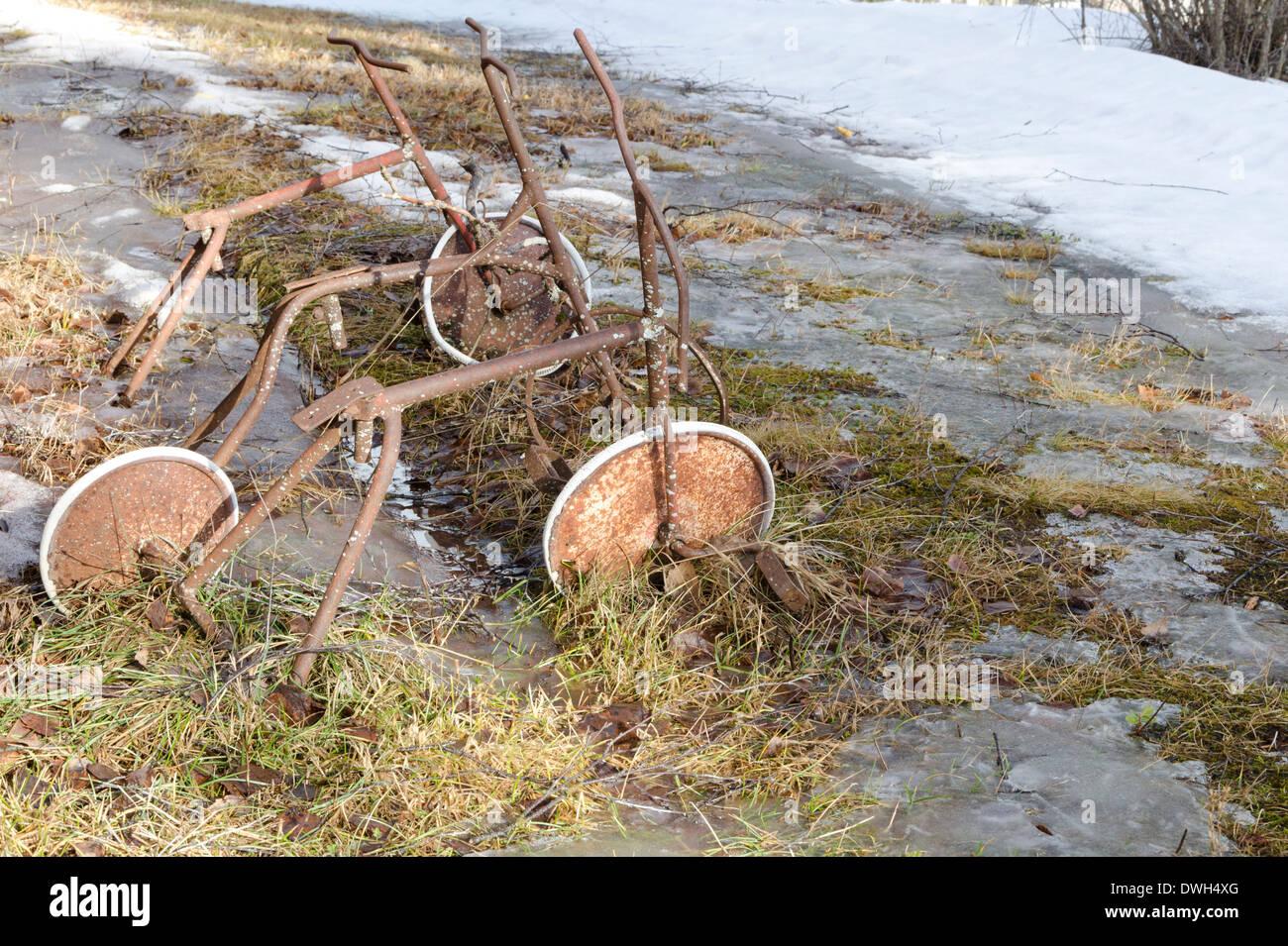 Ciclos de árbol viejo Foto de stock
