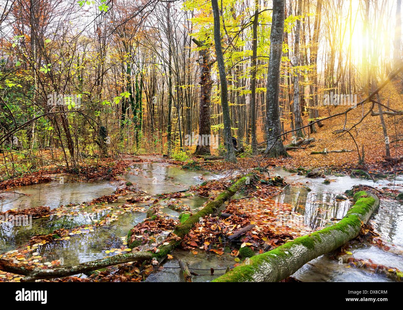 Cascada río de montaña en el bosque en otoño Foto de stock