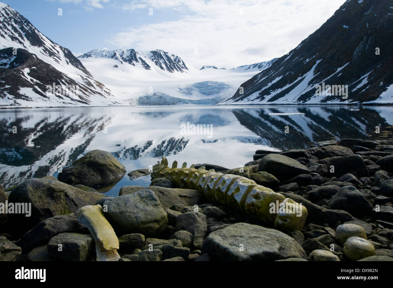 Ballena Rorcual animales mamíferos mamíferos marinos biología de ...