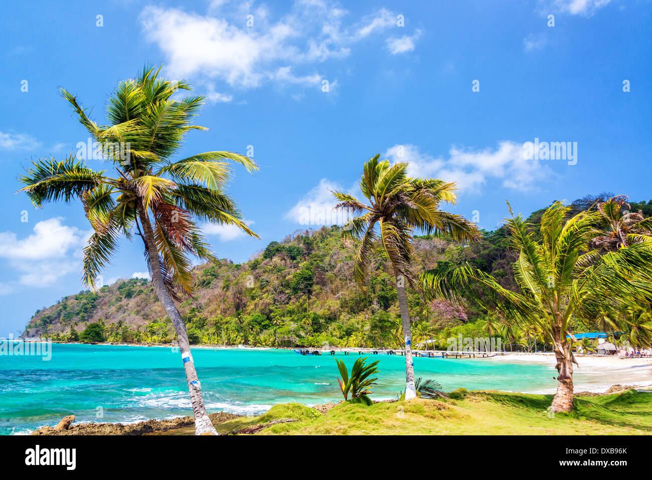 Tres palmeras alineadas junto a las aguas turquesas del Mar Caribe en la Miel, Panamá Foto de stock