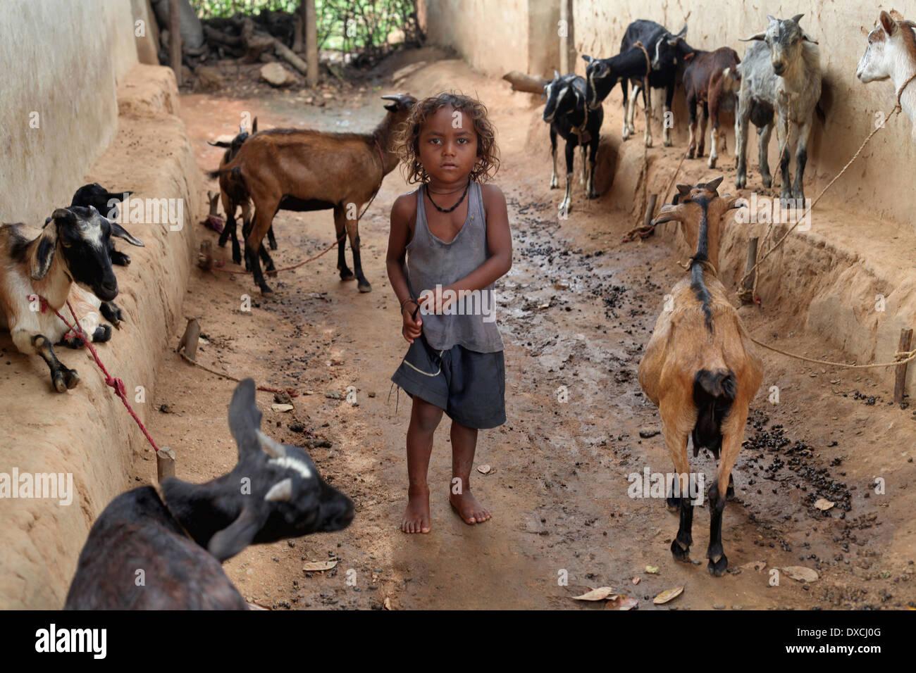 Un niño tribales pobres. Tribu Santhal. Bloque Bishangarh Jarweadhi Village, distrito Hazaribaug, Jharkhand Imagen De Stock
