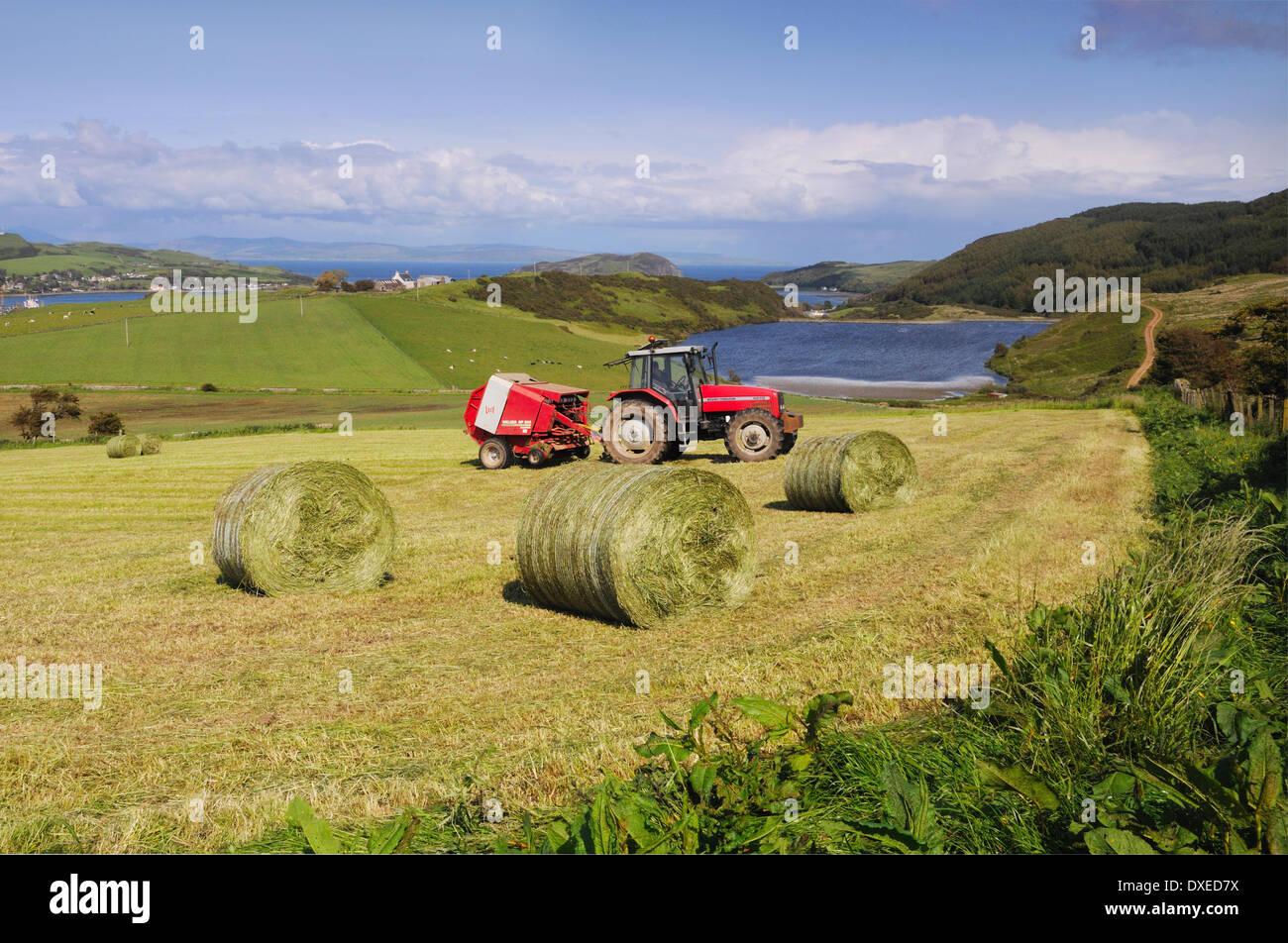 La agricultura fuera de Campbeltown,, Argyll Kintyre Imagen De Stock