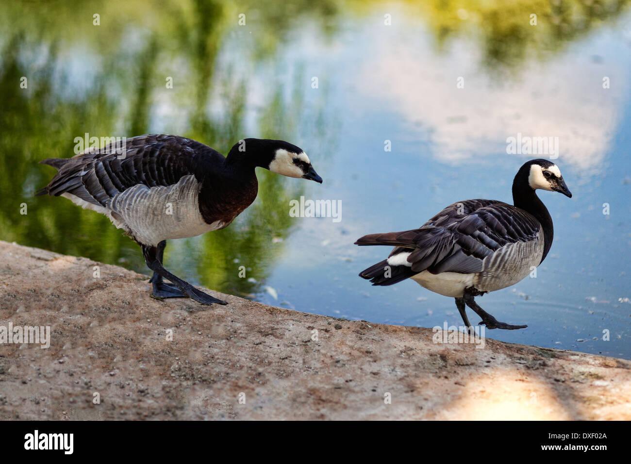 Los hermosos pájaros en el zoo Foto de stock